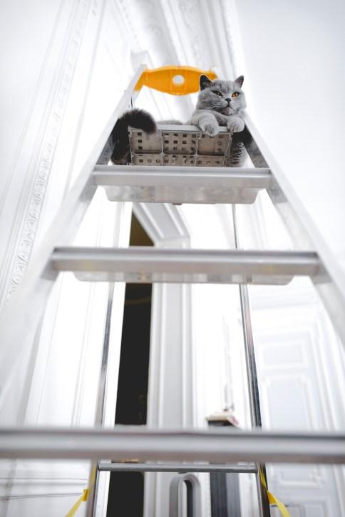 chat-escabeau-2