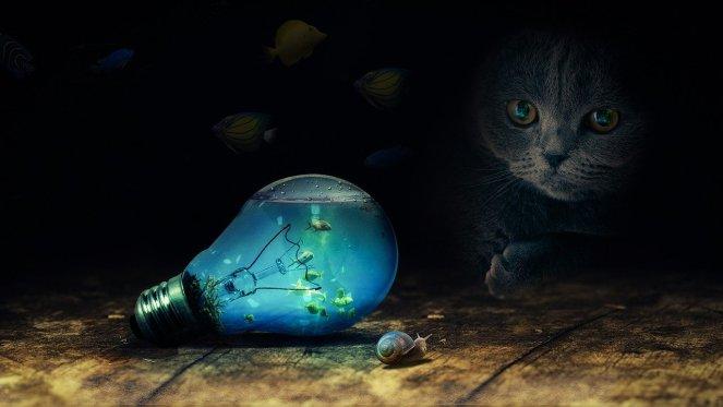 modré světlo jak se chránit