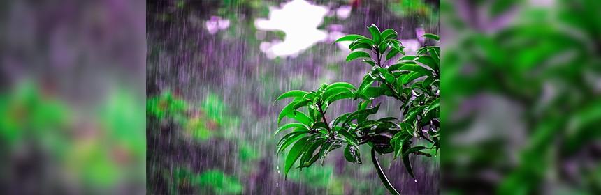 El Nino, Monsoon