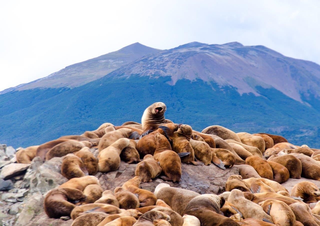 Lobos Marinhos 2 1 - Quer Viajar para a Patagônia Argentina? O que visitar em El Calafate e Ushuaia?