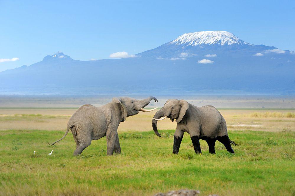 kilimanjaro-saiba-tudo-sobre-esse-destino-de-viagem.jpeg
