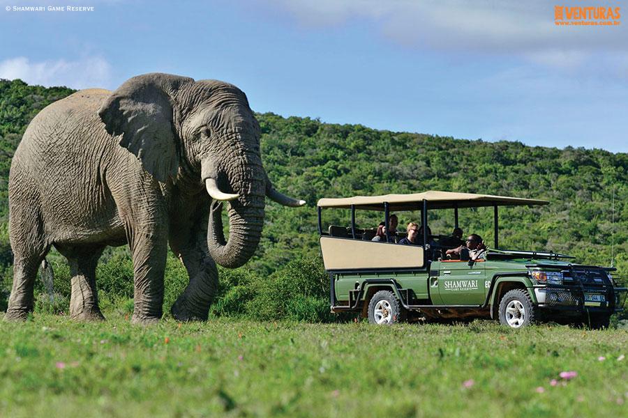 África do Sul - Elefantes