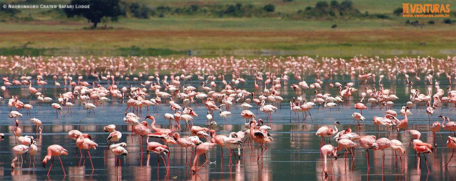 Ngorongoro Crater Safari Lodge - Kenya e Tanzânia - A natureza selvagem do leste