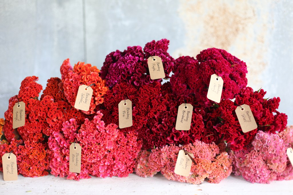 Perfect-wedding-flower-venuerific-blog-the-artsy-hipster-celosia-flower-tag