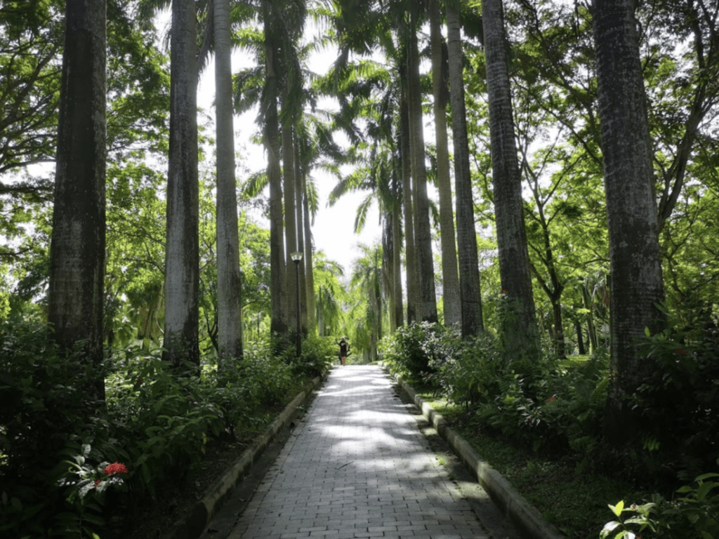 city forest in punggol singapore with several large trees and small pathway