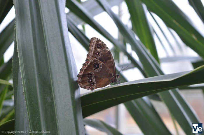 Butterflies in the Glasshouse RHS Wisley