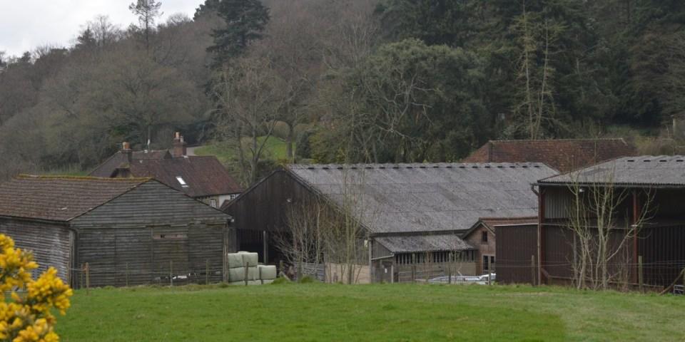 Ферма Coverwood Lakes: скот, арборетум и опера