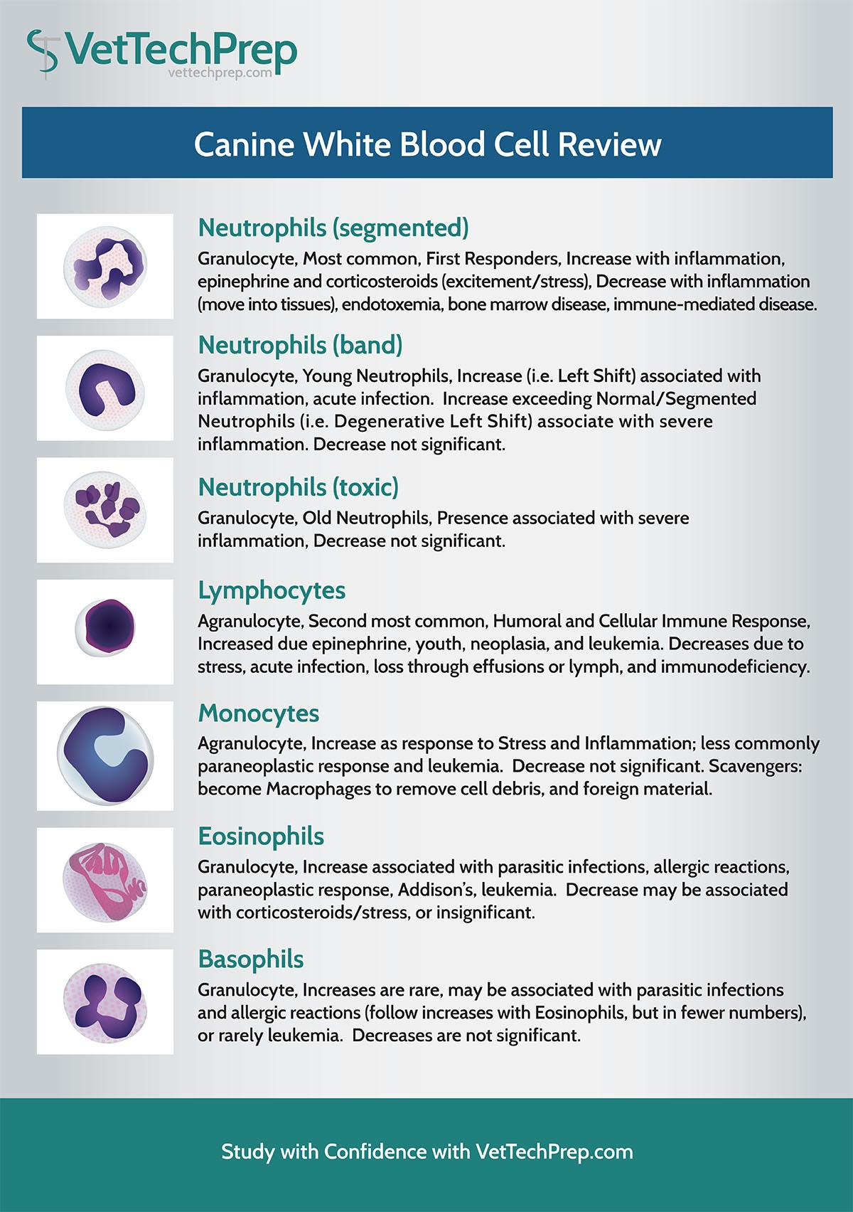 Infographic Canine White Blood Cell Review