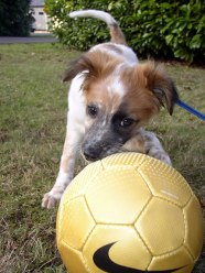 Soccer pup