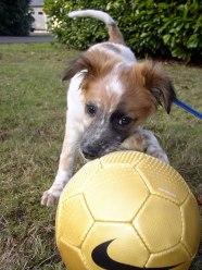 Soccer pup