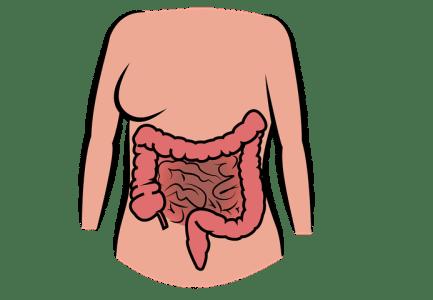Darmgesundheit – Die 6 Ursachen für eine Darm-Dysbiose