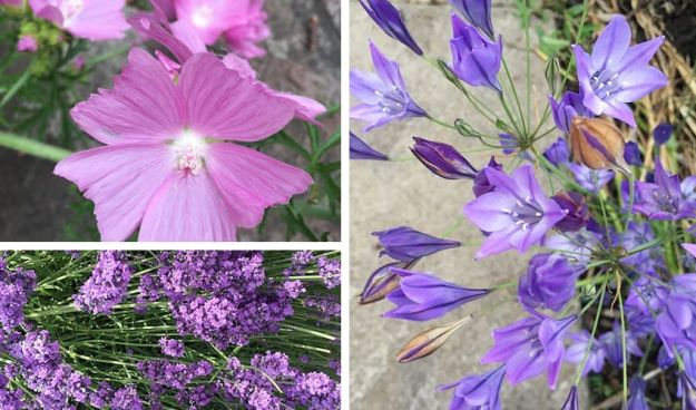 summer in the garden - purple flowers, 3 photos, includes lavender