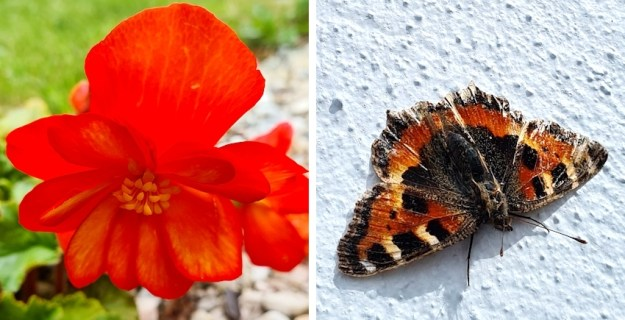 flower and a tortoiseshell butterfly