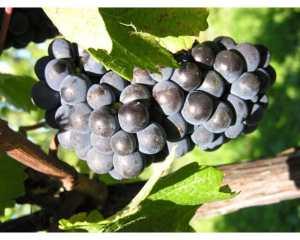 10種類のワインをフリーティスティング!