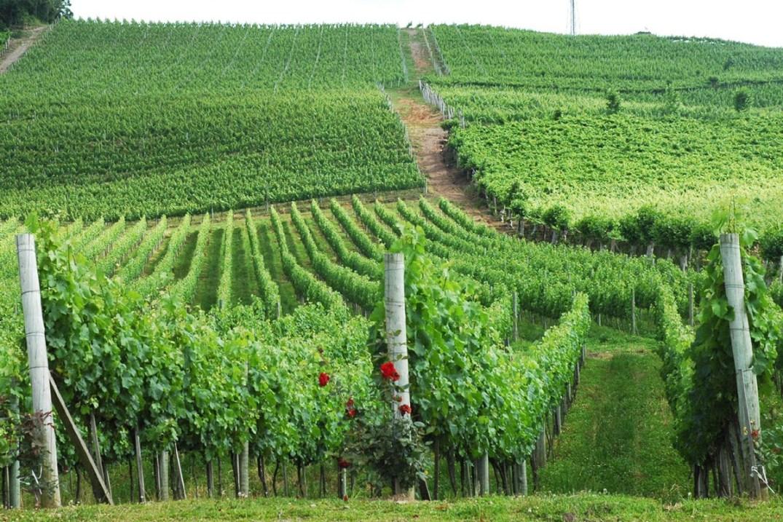Indicação de Procedência do vinho brasileiro. Confira quais regiões têm IP