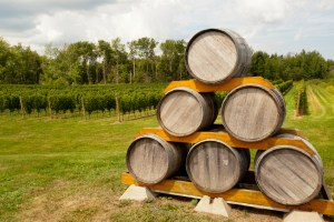 WineBarrels_Vineyard