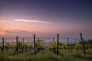 Take a Page-Turning Tour of 4 European Wine Countries
