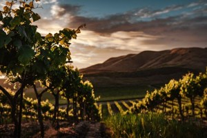 September in the Vineyard: A Treat for All the Senses