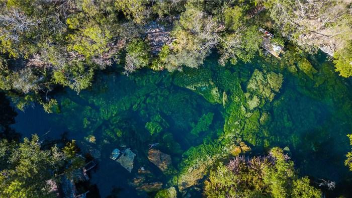 Cenote Jardin El Eden