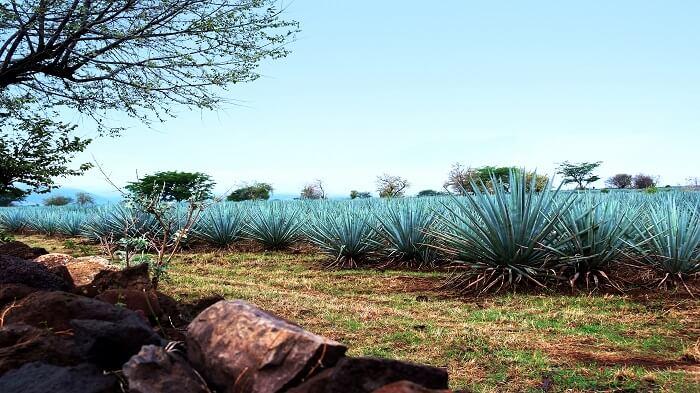 Pueblos Mágicos cerca de Jalisco