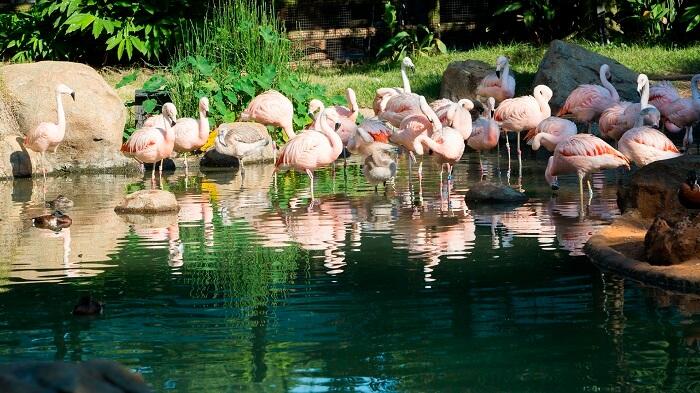 Zoológico de Houston