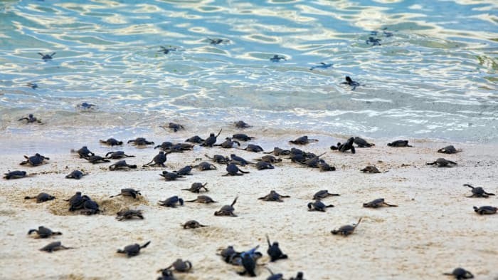 liberacion tortugas cozumel