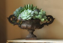 ON TREND: SUCCULENTS AND CACTI FOR INTERIORS