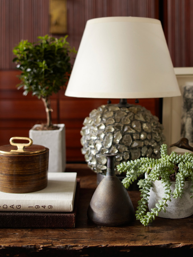 Delicate succulent in an interior designed by Steven Gambrel