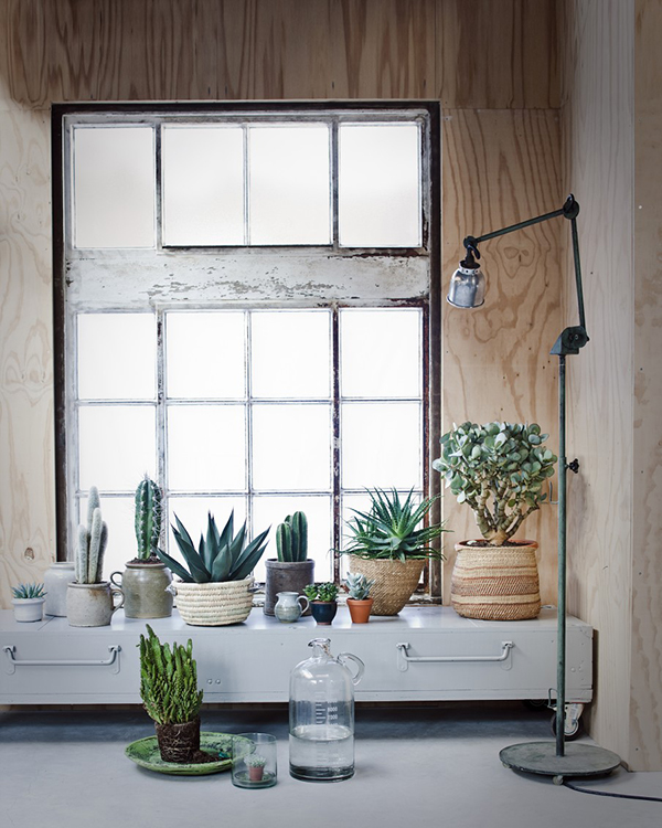 Windowsill filled with cacti and succulents - via VT Wonen