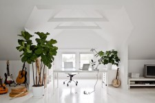 ON TREND: THE FIDDLE LEAF FIG