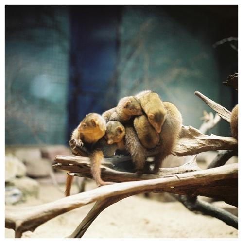 Uyimbube - Zoologischer Garten Berlin