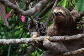 costa rica min Volunteer in Costa Rica | The Ultimate Guide