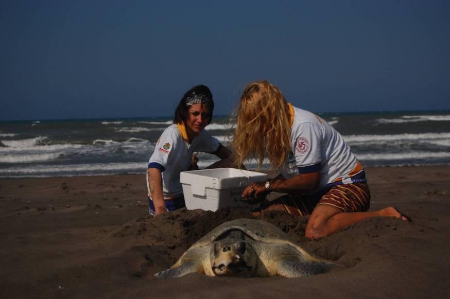 Volunteer Fundacion Yepez 38 1024x681 Things you can do to save leatherbacks sea turtles