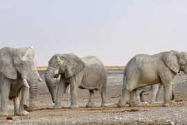 elephant 1170111 1920 Volunteer in Wildlife Conservation | The Ultimate Guide