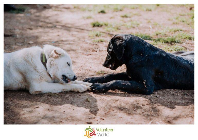 Animal Care Europe