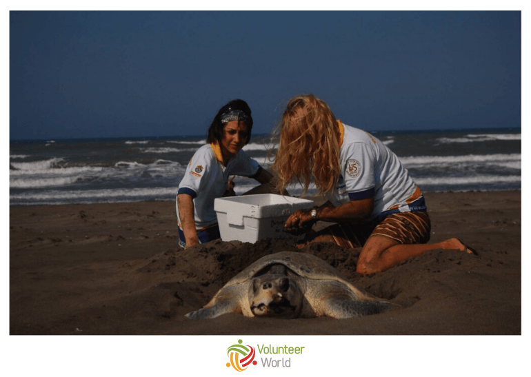 Collecting Sea Turtle Eggs