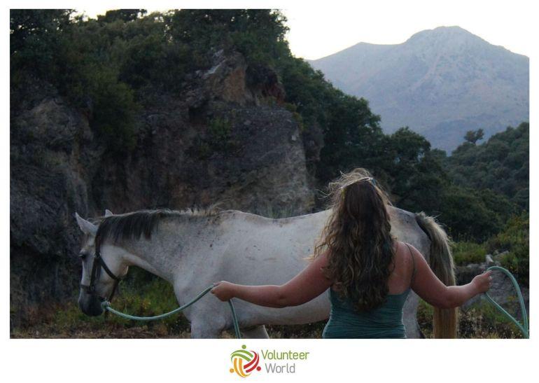 Volunteer with Horses in Spain