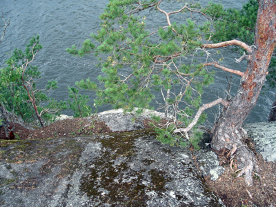 A view down from the top of the cliff.