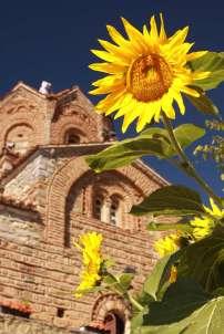 Sunflowers in Macedonia