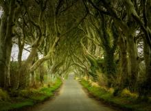 Dark Hedges Northern Ireland
