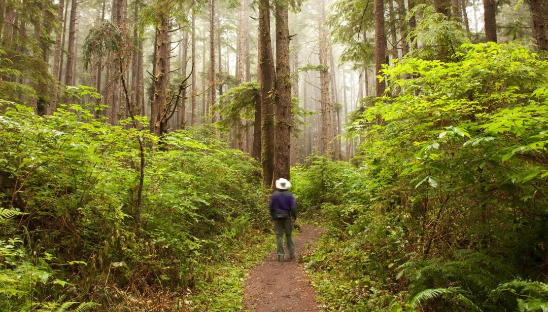 Man walking in Olympic National Park
