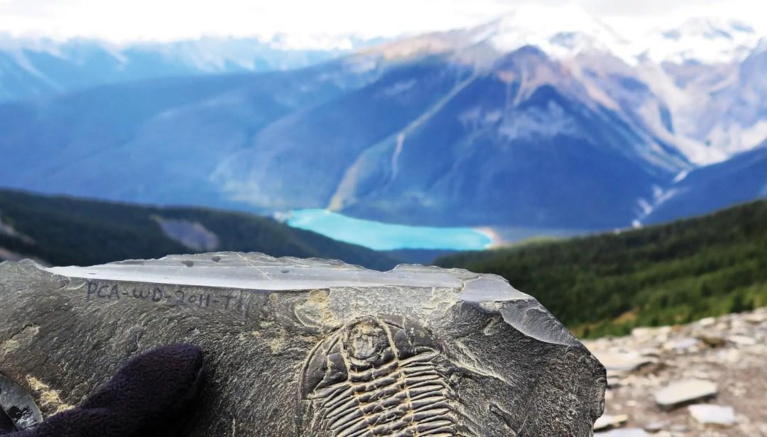 Burgess Shale fossils at Walcott Quarry in Yoho National Park, British Columbia.