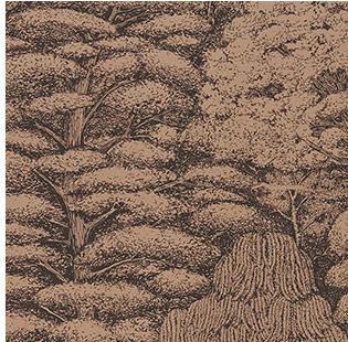 Woodland_20.jpg