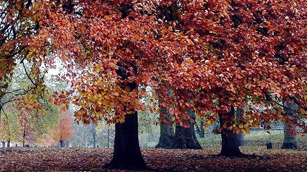 autumn_05.jpg