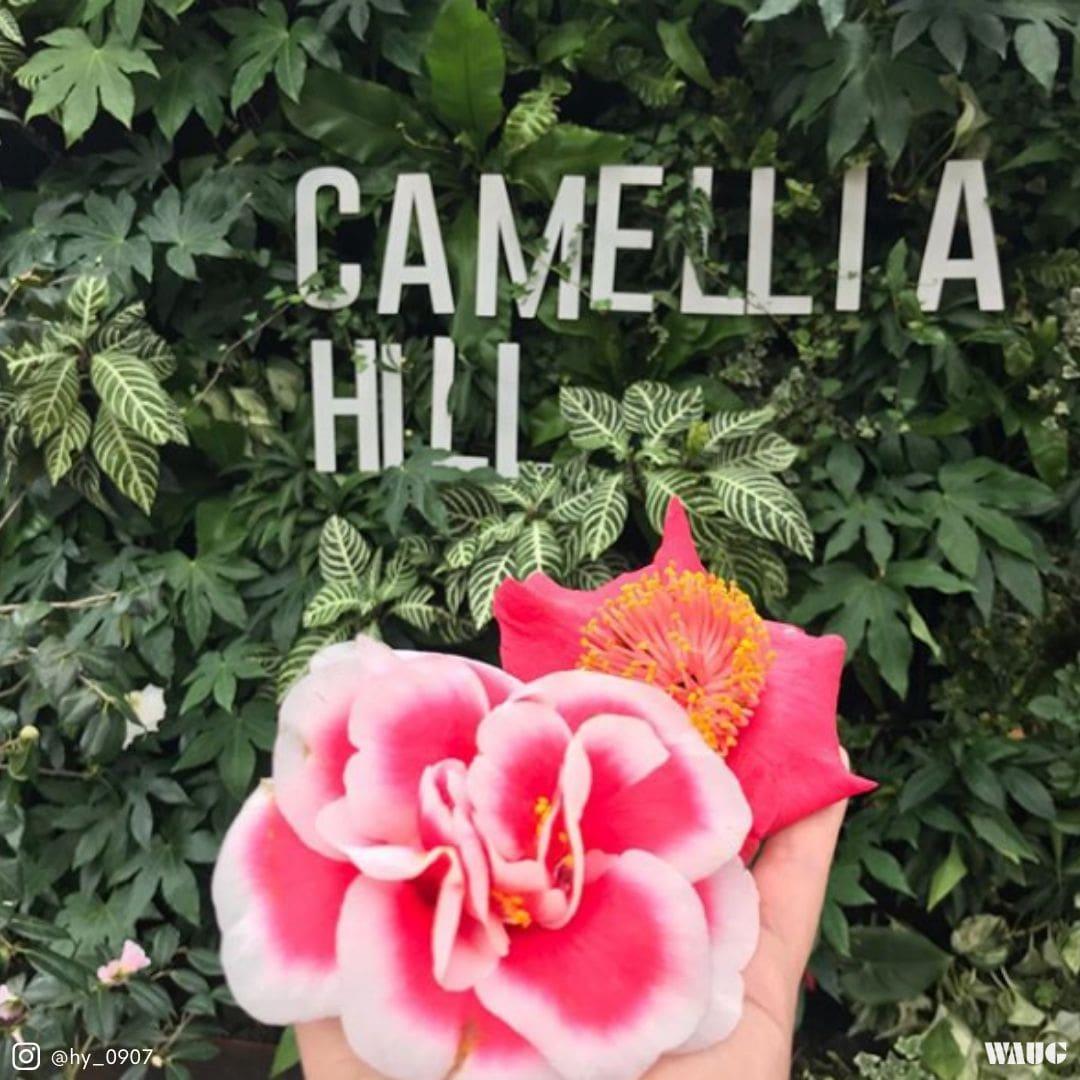 camellia-hill-jeju-ticket