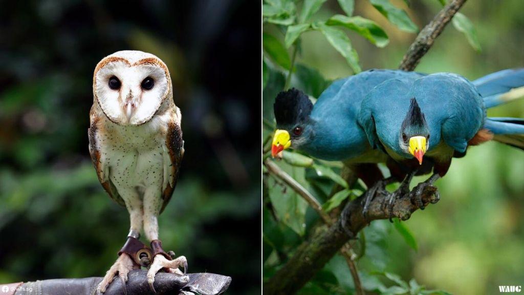 jurong-bird-park-open