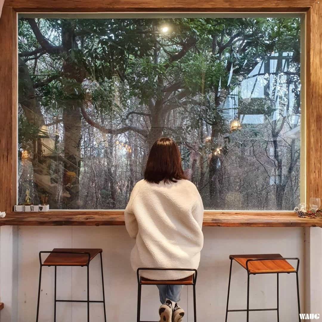 Jeju Tour - Cafe