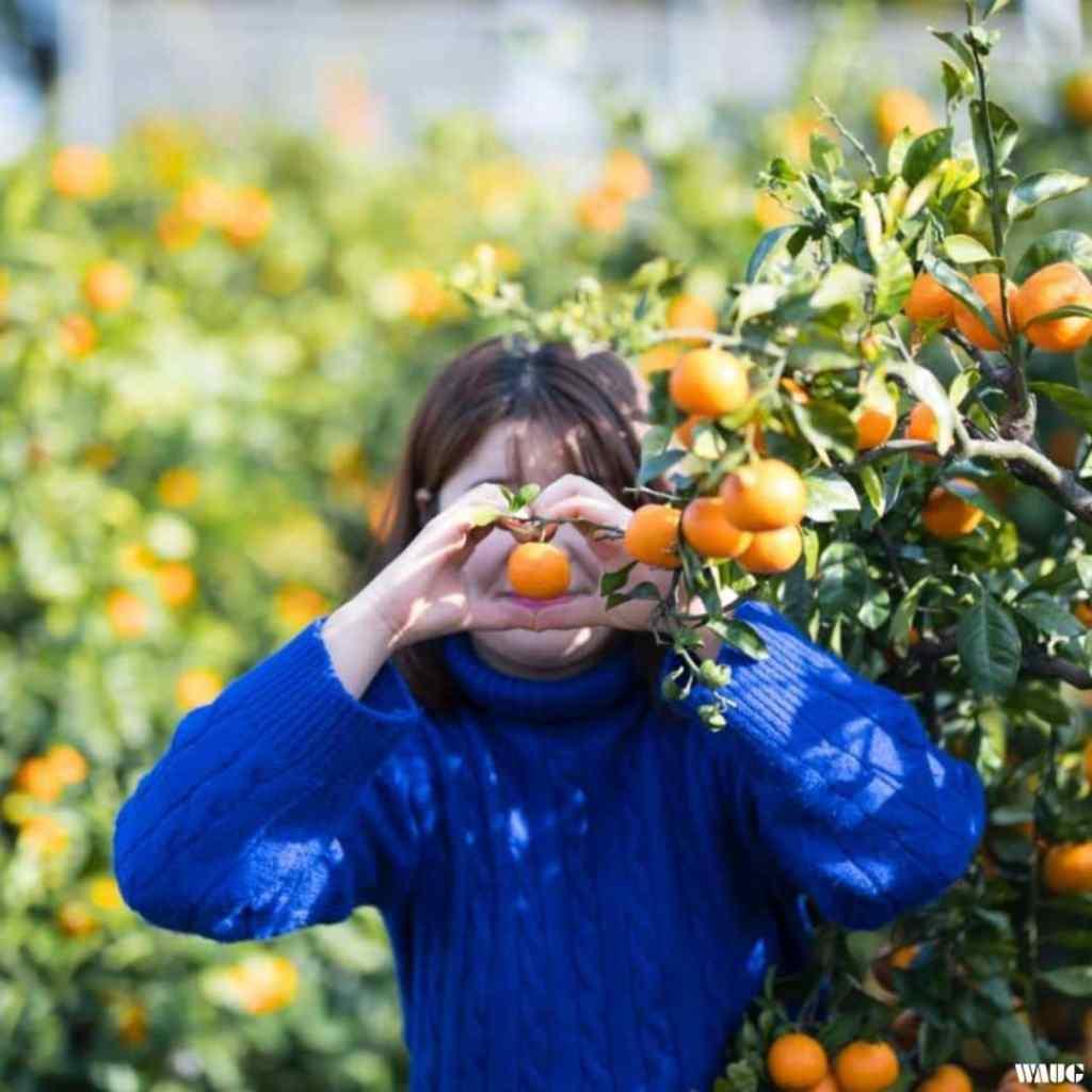 Jeju Tour - Citrus Musem