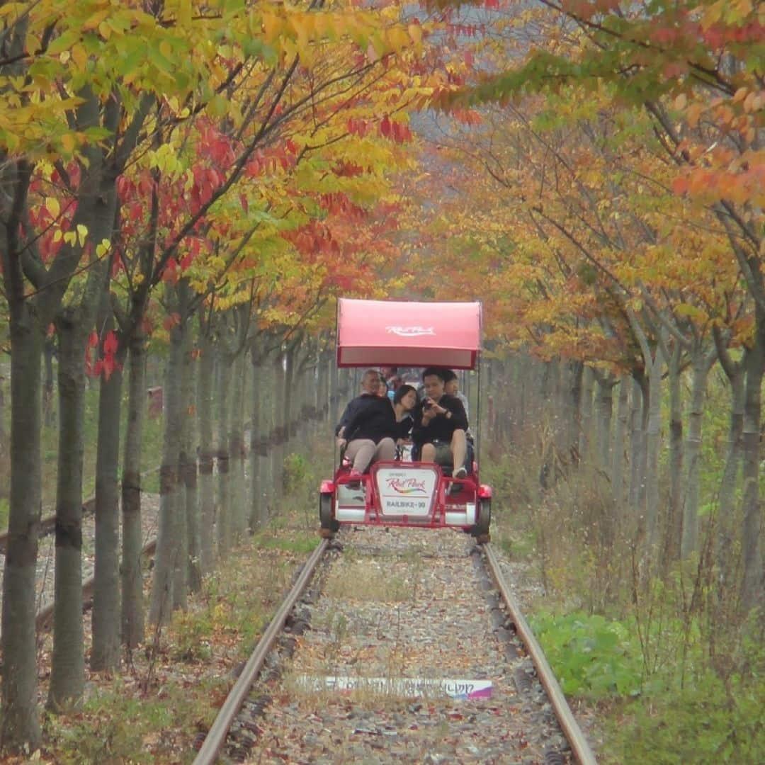 gangchon-rail-bike-autumn-fall