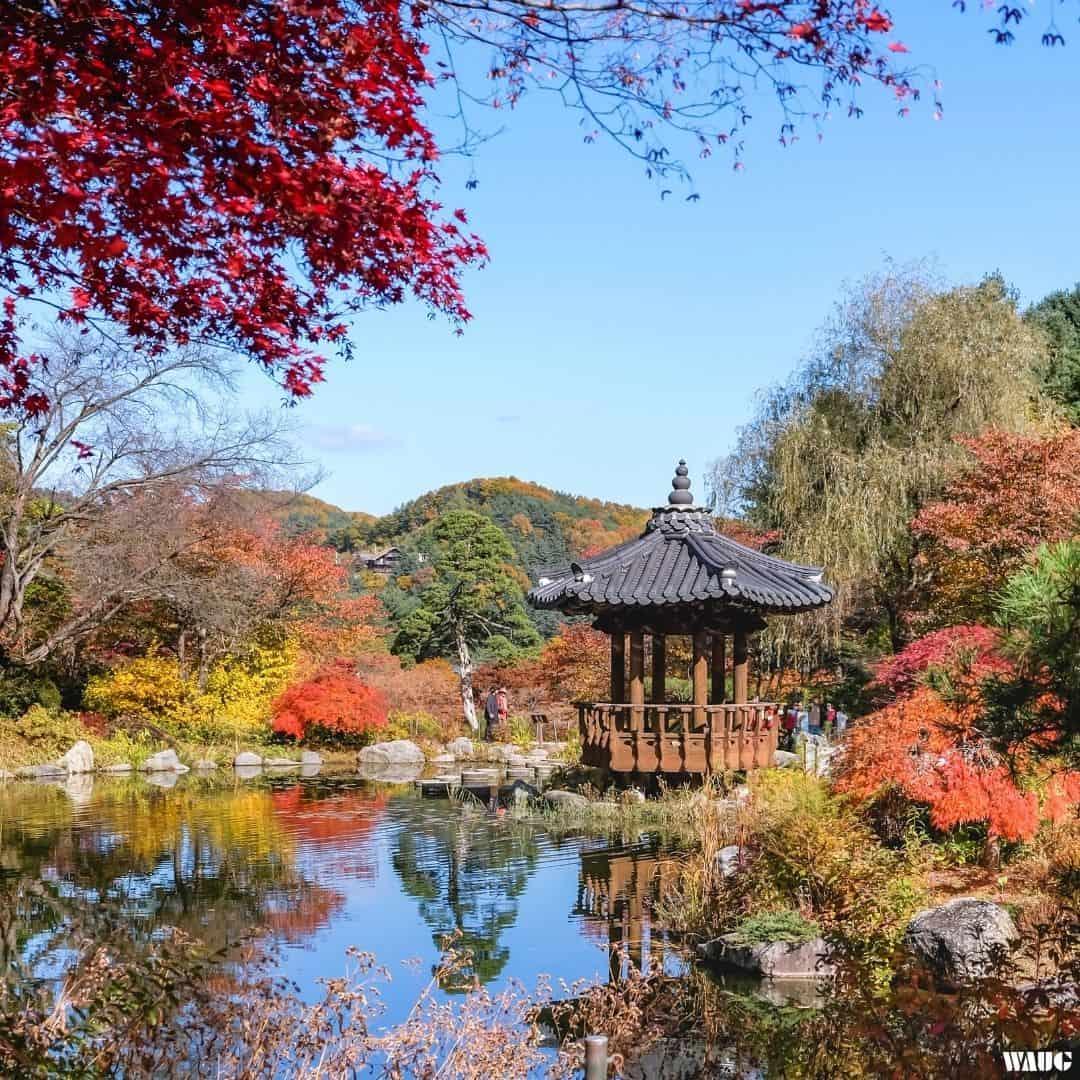 garden-of-morning-calm-autumn-1